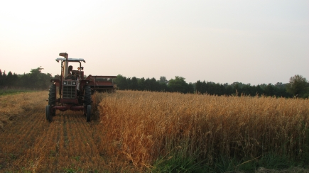 Watching our combine harvest the hulless oats is a thing of beauty. Can you imagine the time it would take to do this by hand?